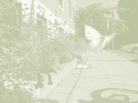 White Blur / 1