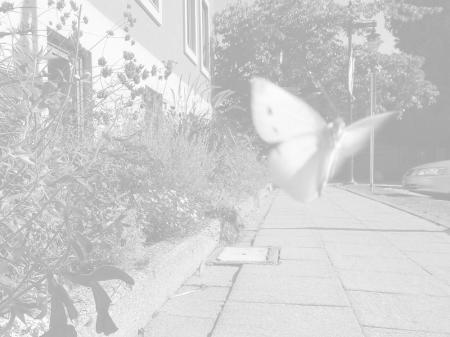 White Blur / 2